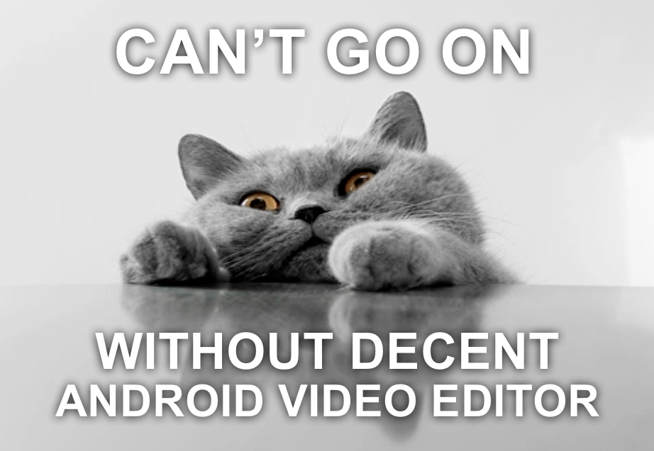 Cat Android App Meme